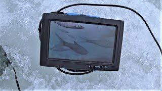 С камерой подледной рыбалки
