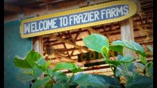 Enjoy the Sweetest Corn at Frazier Farms on Florida's Adventure Coast (2021)
