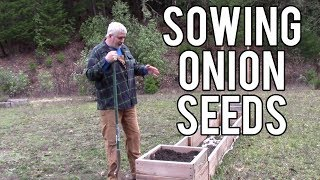 Sowing Onion Seeds