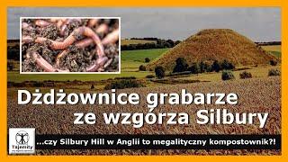 Dżdżownice grabarze ze wzgórza Silbury w Anglii