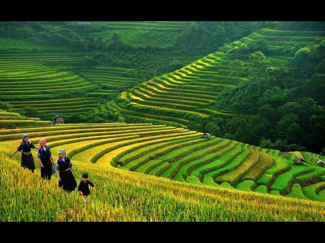 Giải mã giấc mơ thấy đi cấy đánh con gì, có điềm gì | Asianbetting.net