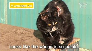 What Happened To The Stray Cat With A Severe Injury On Her Back? | Kritter Klub