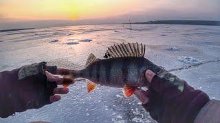 Балансир отчеты о рыбалке в тольятти