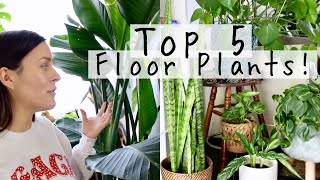 Top 5 Floor Plants!   My Favorite Large HousePlants To Keep Low!
