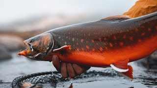 FLY FISHING for ARCTIC CHAR in GREENLAND!