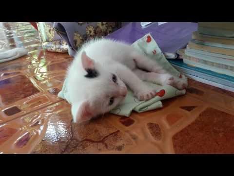 ฉีดแมวจากปรสิต