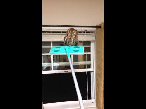 貓頭鷹闖進家門,屋主的反應史上最好笑+驚恐
