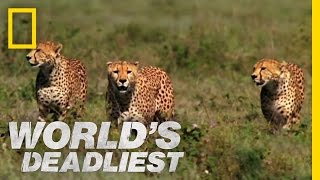 World's Deadliest - Cheetah Brothers' Takedown