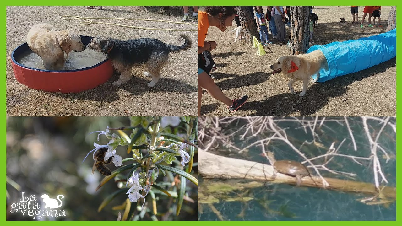 MY VEGAN LIFE #3 ENCUENTRO CANINO, TORTUGA LEPROSA, ABEJAS, AGILITY, PISCINA PARA PERROS Y ONGS