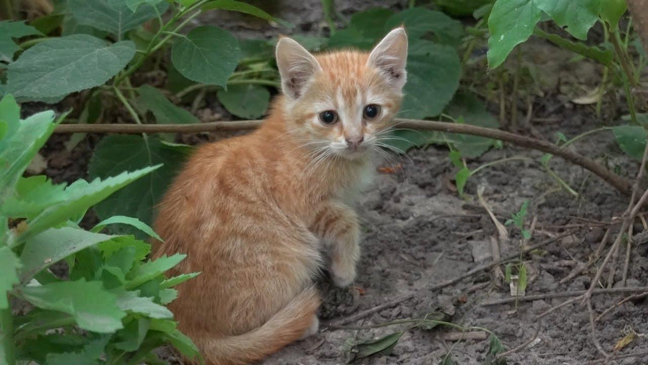 new ginger kitten is afraid of me