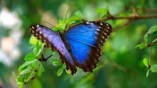 BBC Перетворення: наука змін (Metamorphosis: The Science of Change)