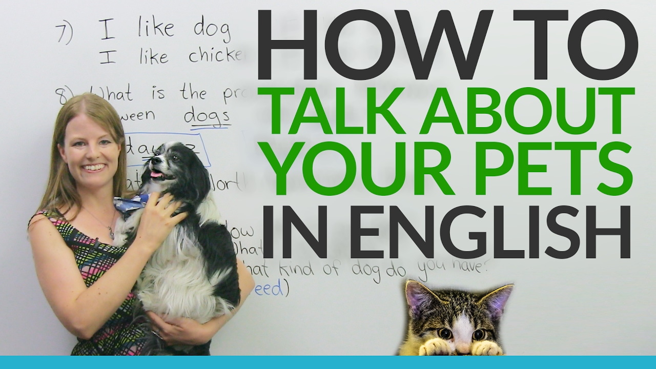 real english talking about pets and animals 183 engvid