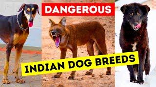 9 Dangerous Dog Breeds That Indians Still Keep as Pets