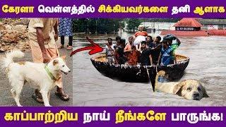 கேரளா வெள்ளத்தில் சிக்கியவர்களை தனி ஆளாக காப்பாற்றிய நாய் நீங்களே பாருங்க!| Tamil News |