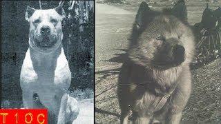 Top 10 increíbles razas de perros que se extinguieron