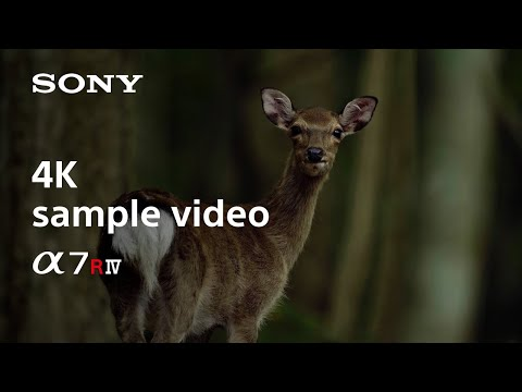 Sony Alpha 7R IV Body (61Mpx, Vollformat)