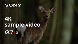 YouTube Video UyEuPg6GXdU for Product Sony A7RIV (A7R4, ILCE-7RM4) Full-Frame Mirrorless Camera by Company Sony Electronics in Industry Cameras