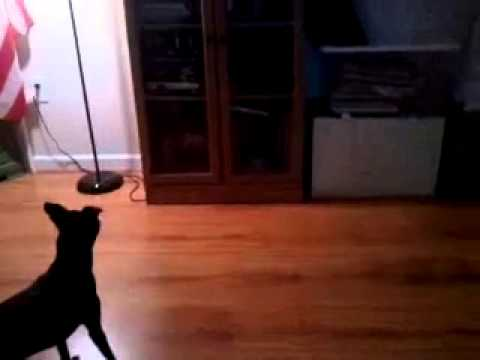 This video was taken in Williamsburg, Virginia and was sent to Colonial Ghosts Tours to share with you.The dog began barking frantically at the wall. After about a minute of this, at 31 second to 35 seconds in this video, you will notice a small orb of light coming out of that area and past the dog. Do you believe animals can sense things we can't?Look closely at 32 seconds and notice a small, white orb light come out of the media cabinet that the dog is barking at.This video was provided by one of Colonialghosts.com 's contributors. Have any sightings caught on film? Send it to us and subscribe to our youtube page for more!
