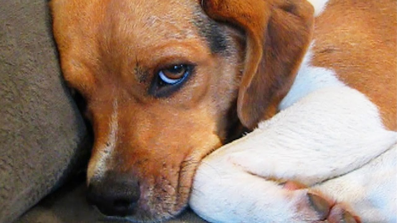 11 Guilty Dogs Who Are Very Sorry thumbnail