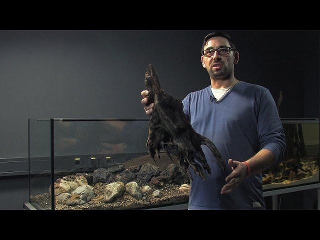 Einrichten (step by step) eines Biotop-Paludariums mit Alexander Krohn