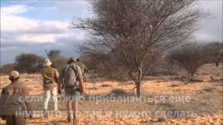 Охота на льва в Калахари c Tokkroos Safari