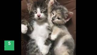 Top ten funny and cute cats | 10 adorable little kittens