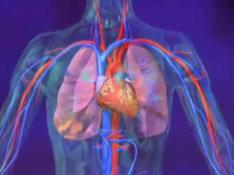 Médicaments pour lhypertension