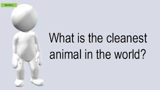 What Is The Cleanest Animal In The World?