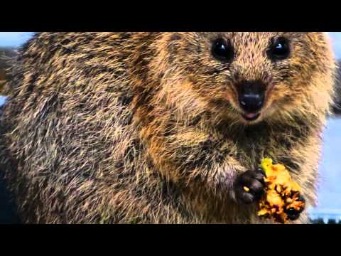 Rottnest Island, home of the Quokka