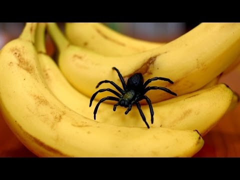 SPIDER IN BANANA!