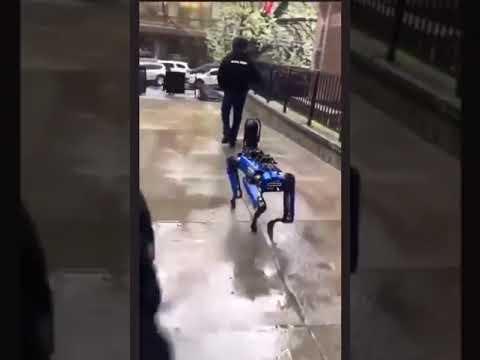 بالفيديو .. شرطة نيويورك تستبدل الكلاب البوليسية بـ