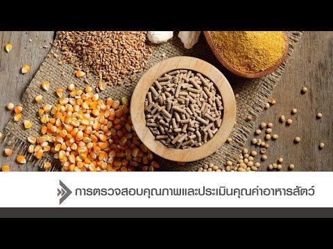 หนอนไทย