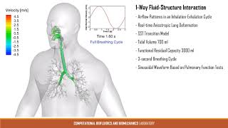 CBBL's elastic lung simulations win ANSYS Hall of Fame Competition 2019