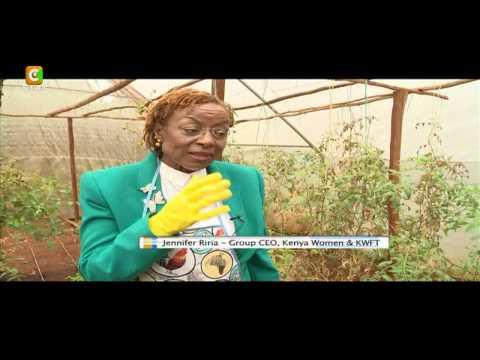 Strength Of A Woman: Dr Jenniffer Riria KWFT CEO