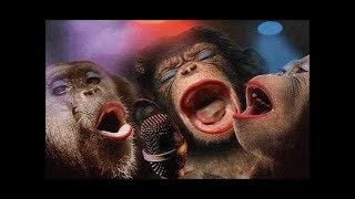 System Of A Down - Chop Suey (Animal Edition | Cover)| Животные Кавер| SOAD
