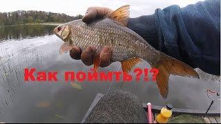 Как поймать крупную плотву на реке