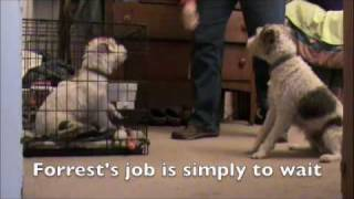 Training Two Dogs at Once