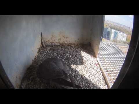 Nest 2: First Look - 07.04.17