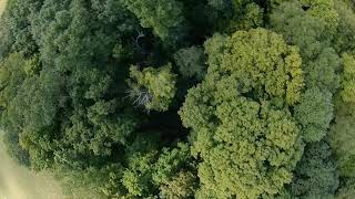 Flying FPV In The Woods