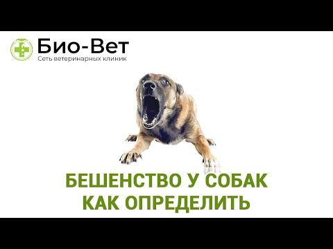 Бешенство у Собак: Как Определить // Прививки От Бешенства для Собаки // Сеть Ветклиник БИО-ВЕТ