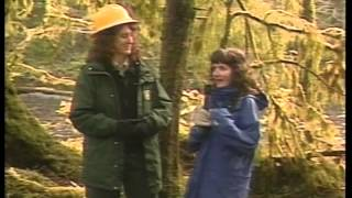 Characteristics of temperate rain forests