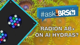 Can you create Radion's AB+ spectrum on AI Hydras? - #AskBRStv