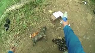 Спасение утопающего щенка