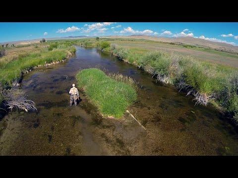 Bækørred og regnbueørred på flue i Montana