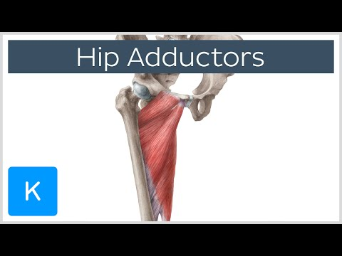 Thigh Adductor
