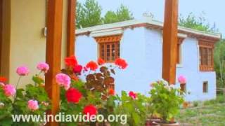 Snow Leopard: The homestay in Hundar Village