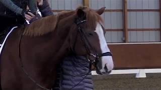 Equine Slumbers