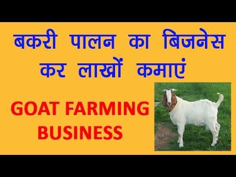 Goat Farming Service in Nagpur, बकरी की खेती की