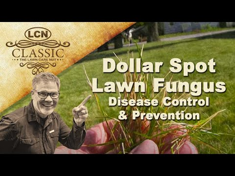 Video Dollar Spot Lawn Fungus | Disease Control and Prevention