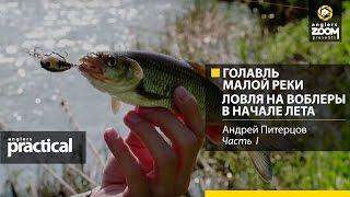 Голавль малой реки. Ловля на воблеры в начале лета.Андрей Питерцов.Anglers Practical
